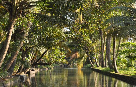 Backwater-honeymoon-trip