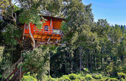 Kerala with Kodaikanal Honeymoon Tour Package