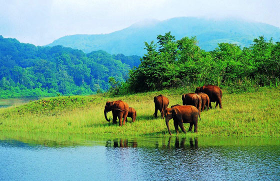 Kerala-thekkady-honeymoon