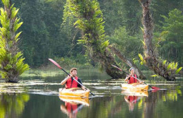 Hills, Backwaters and Forest Honeymoon Tour Package