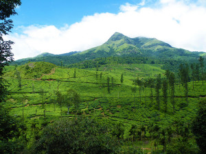 Wayanad Honeymoon - Chembara Peak