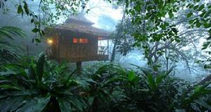 Kerala tree house