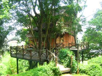 Kerala Tree House Honeymoon Kerala Honeymoon Tour Packages