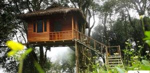 Kerala treew house