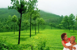 Green Kerala honeymoon tour package